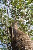Förgrena sig av trees.2 Royaltyfri Bild