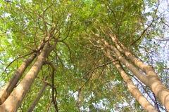 Förgrena sig av trees. Arkivfoton