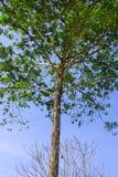 Förgrena sig av trees.3 Arkivbild