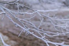 Förgrena sig closeupen som täckas med rimfrost Royaltyfria Bilder