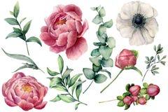 Förgrena sig den blom- uppsättningen för vattenfärgen med blommor och eukalyptuns Räcka den målade pionen, anemonen, bär och sido stock illustrationer