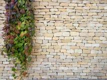 Förgrena sig den dekorativa växten på tegelstenväggen Gräsplan förgrena sig på textur för stenvägg Royaltyfri Fotografi