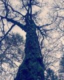 Förgrena sig högväxt blackwhite för trädet träd Fotografering för Bildbyråer