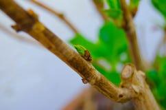 Förgrena sig med knoppen på en grön bakgrund, vegetation Royaltyfri Foto