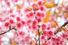Förgrena sig med rosa blomningar royaltyfri foto