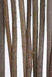 Förgrena sig träpinnen Arkivfoto