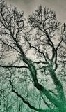 Förhöjt läskigt träd Royaltyfria Bilder
