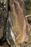 """Förhistorisk Coa-flod†""""vaggar gravyrer arkivbild"""