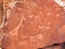Förhistoriska obygdsbogravyrer på Twyfelfontein i Namibia Royaltyfri Foto