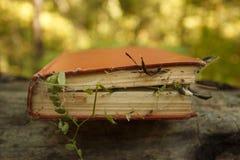 Förhuxen bok med magiväxt- och spindelrengöringsduk, begrepp av gåta och negro spiritual royaltyfri bild