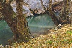 Förkylning för vatten för höstskogträd härlig ny grön royaltyfri bild