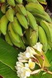 Banan - bananen lämnar och blommar Royaltyfri Bild
