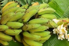 Banan - bananen lämnar och blommar Royaltyfri Foto