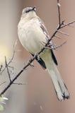 förlöjliga för fågel Arkivbilder
