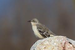 förlöjliga för fågel Royaltyfria Bilder