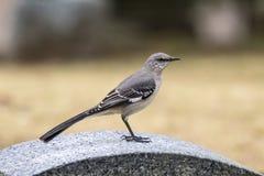 förlöjliga för fågel Fotografering för Bildbyråer