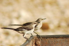 förlöjliga för fåglar arkivfoto