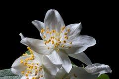 Förlöjliga-orange blommor Arkivfoto