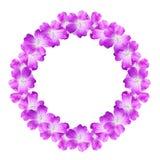 Förlöjliga upp rund blom- ram från blommor av den lösa pelargon som isoleras på vit bakgrund Arkivbilder