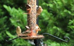 Förlagematare av fåglar Royaltyfri Foto