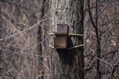 Förlagematare för matningsho, krubba för fåglar och djur på ett träd i skogen royaltyfria foton