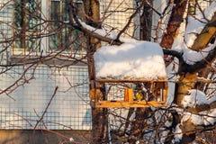 Förlagemataren för fåglar i vinterstaden, mes äter mat arkivbild