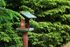 Förlagemataren för fåglar och djur är i skogen fotografering för bildbyråer