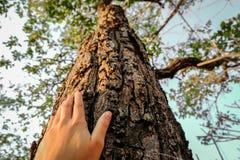 Förlagt på stammen av ett stort träd med fingrar fördjupa och att symbolisera anslutningen mellan människor och naturen royaltyfri fotografi