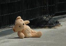 förlorad björn Royaltyfria Bilder