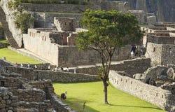 förlorad machupicchu för stad incas Arkivfoto