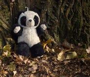 förlorad panda Arkivfoton