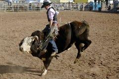 förlorad rodeo för dagar dutchman Royaltyfria Bilder