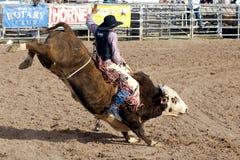 förlorad rodeo för dagar dutchman Royaltyfri Bild