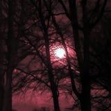 Förmörkelsemåne som går upp royaltyfria bilder