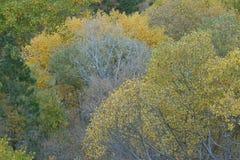Förminskas höstlövverk i fingerkanjonerna av Koloben, South Fork av Taylor Creek, Zion National Park, Utah Royaltyfri Bild