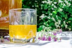 Förnyande kombuchate med timjan i ett exponeringsglas på bakgrunden av suddiga blommor Sund naturlig probiotic smaksatt drink royaltyfri foto