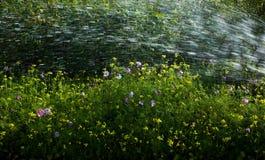 förnyande spary vatten Royaltyfria Bilder