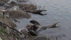 Förorenad flodbank ekologisk katastrof lager videofilmer