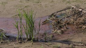Förorenad flodbank ekologisk katastrof arkivfilmer