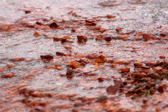 Förorenat flöda för vatten Arkivbilder