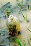 förorenat flodvatten Arkivbild