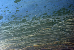 förorenat hav Arkivbild
