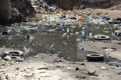 förorenat område Royaltyfri Foto