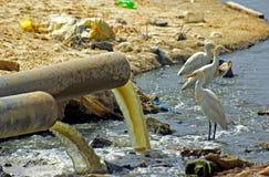 förorenat område Arkivfoto
