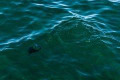 Förorenat vatten Royaltyfri Foto