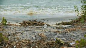 Förorenat vatten som plaskar på kusten, fara till hälsa, miljö- katastrof lager videofilmer