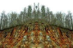 Förorening av naturen och följd Abstrakt sikt av det sjuka trädet i sjuk skog efter surt regn arkivbild