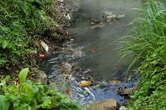 föroreningflod Fotografering för Bildbyråer