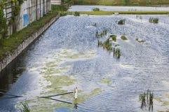 Föroreningmiljö Arkivbilder
