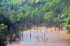 föroreningvatten Fotografering för Bildbyråer